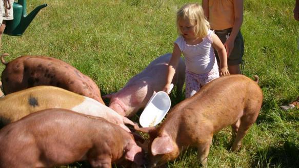 Sommerferie i Danmark på en gård er hyggeligt