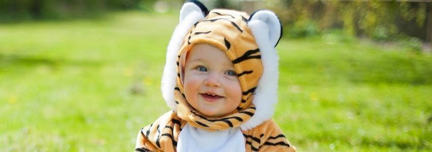 tigerspring tiger