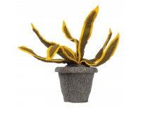 KidsDepot Sanseveria gul plante - filt