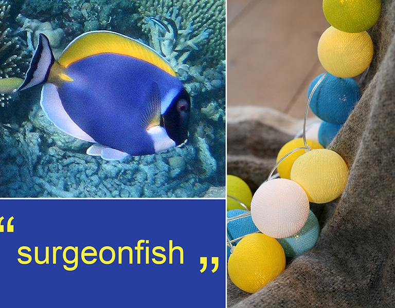 Happy lights surgeonfish - 35 kugler, 5 stk. på lager fra Happy lights på pixizoo