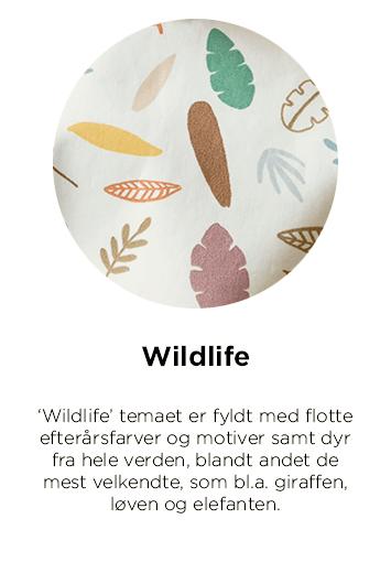 Sebra Wildlife